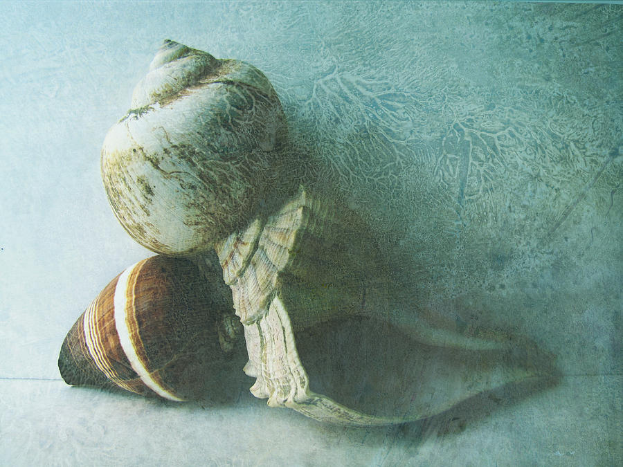Sea Shells IIi Teal Blue Photograph  - Sea Shells IIi Teal Blue Fine Art Print