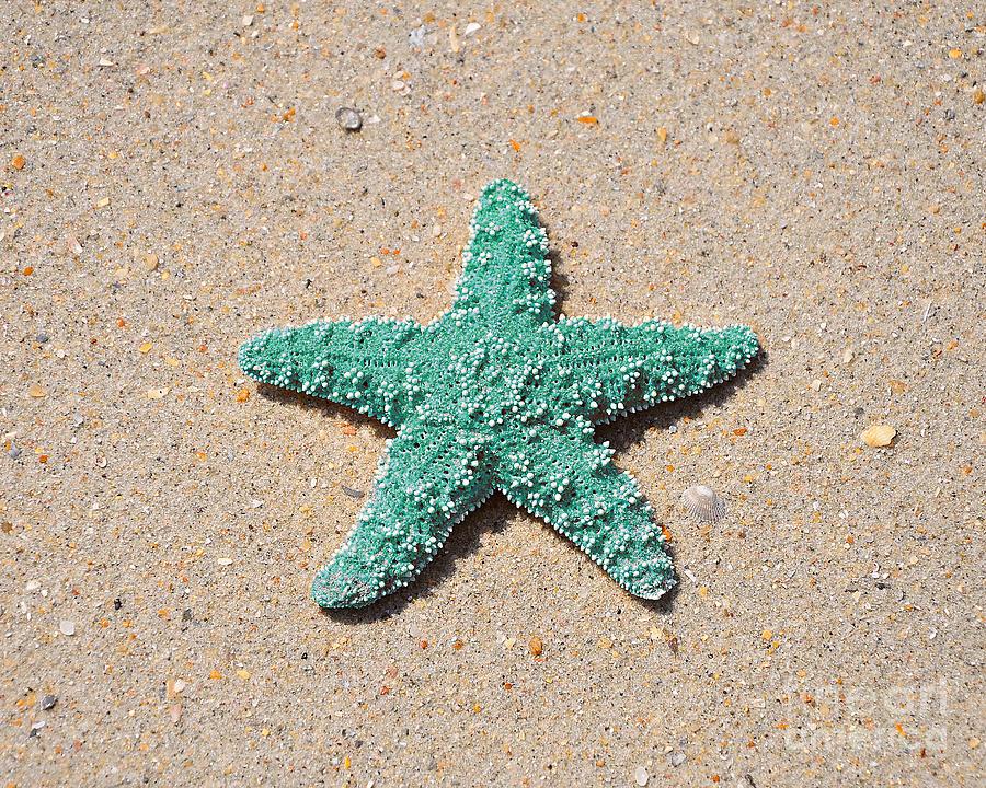 Sea Star - Aqua Photograph by Al Powell Photography USA