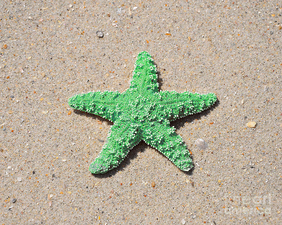 Sea Star - Green Photograph
