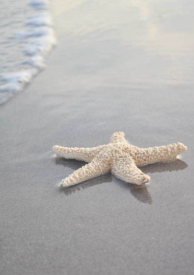 Sea Star Photograph  - Sea Star Fine Art Print