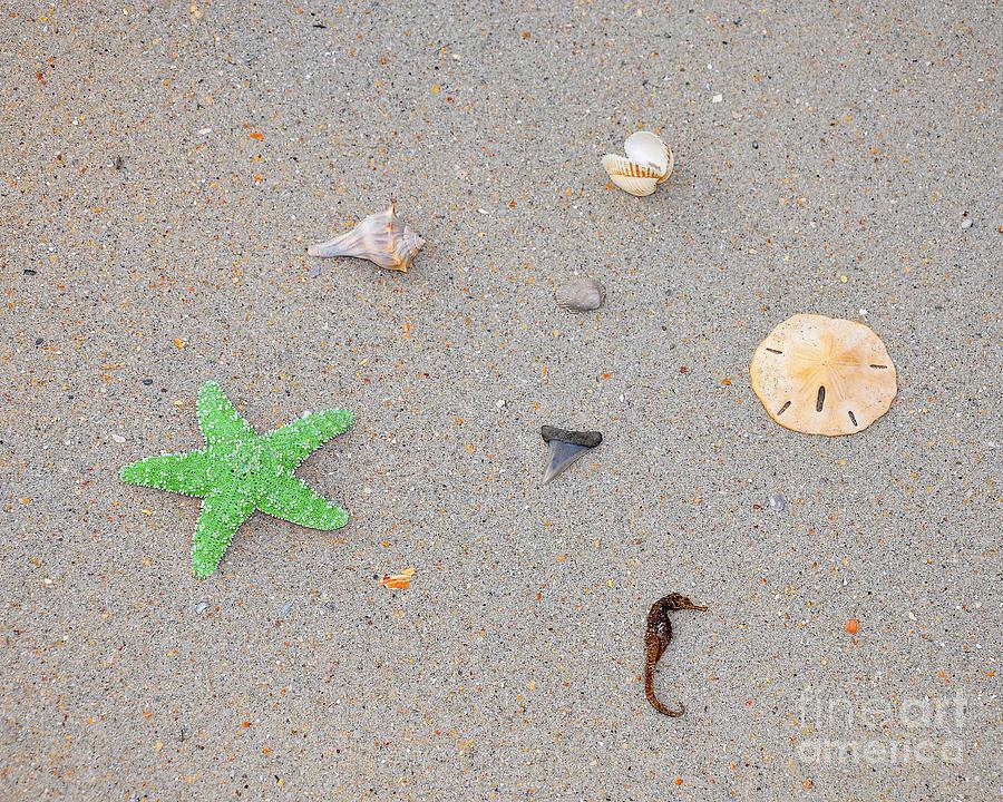 Sea Swag - Green Photograph