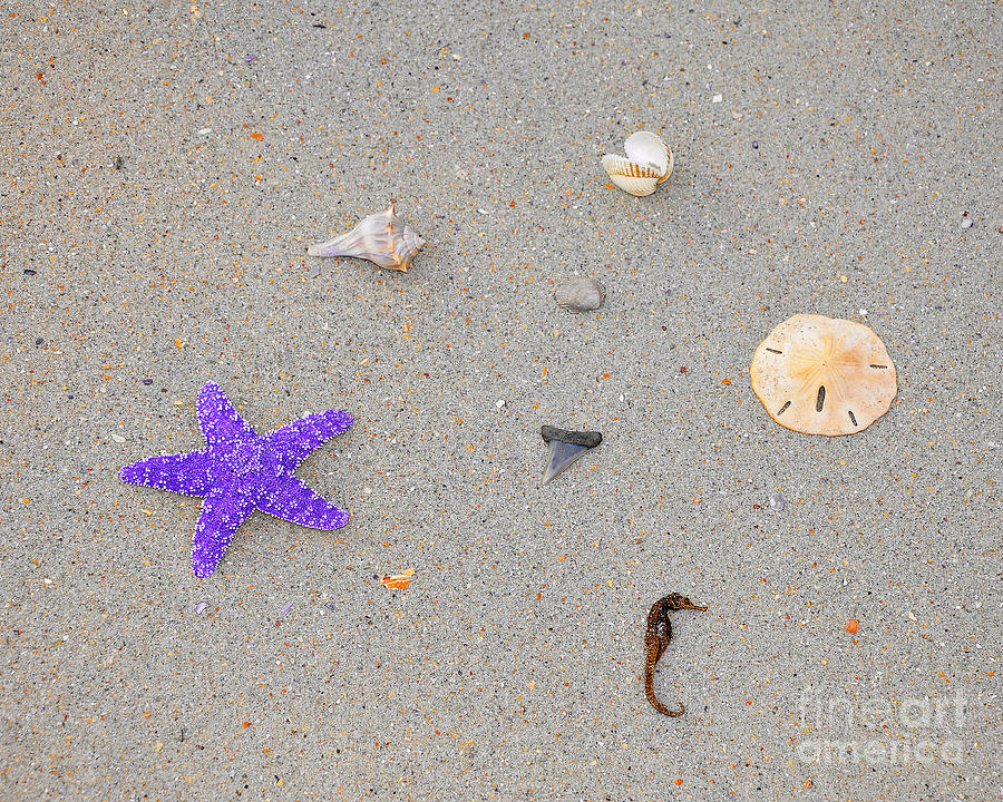 Sea Star Photograph - Sea Swag - Purple by Al Powell Photography USA