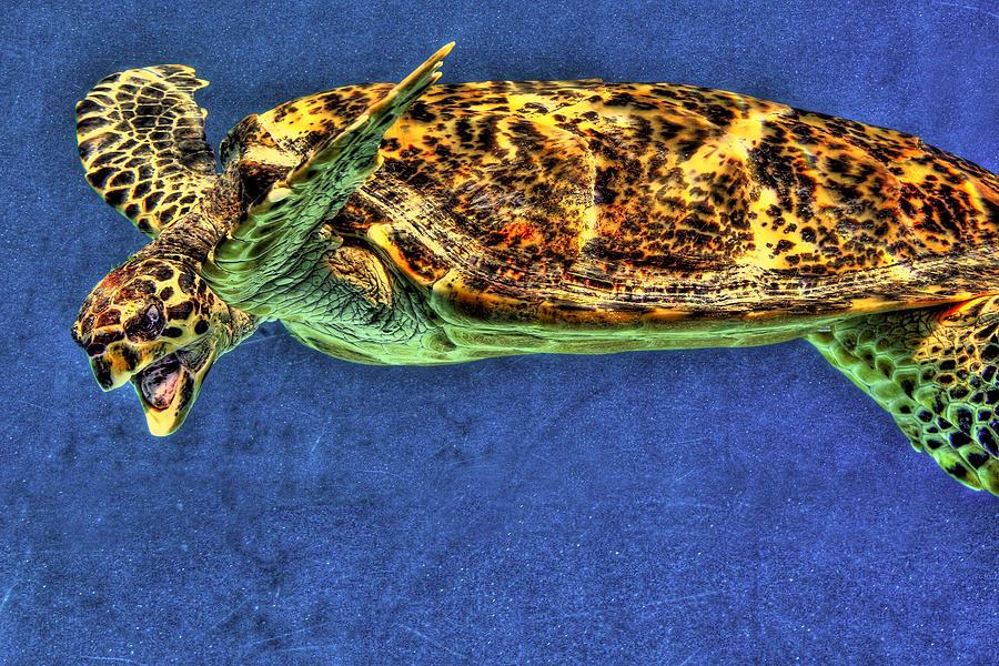 Sea Turtel Photograph