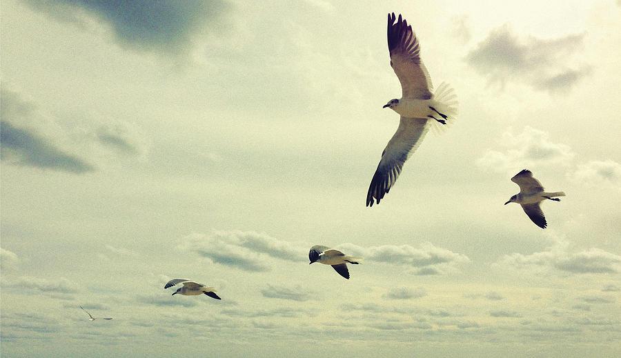Seagulls In Flight Photograph