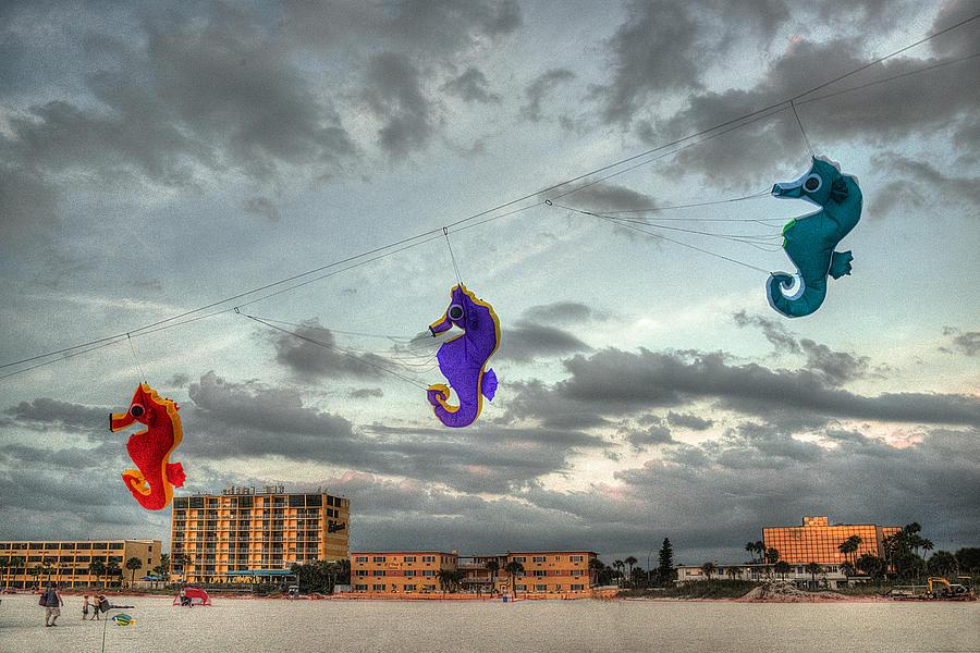 Seahorse Dance Photograph