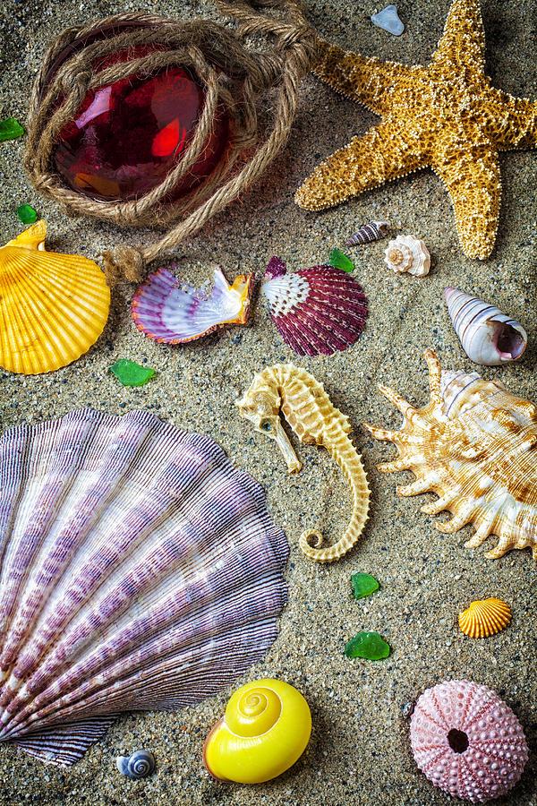 Seahorse With Many Sea Shells Photograph