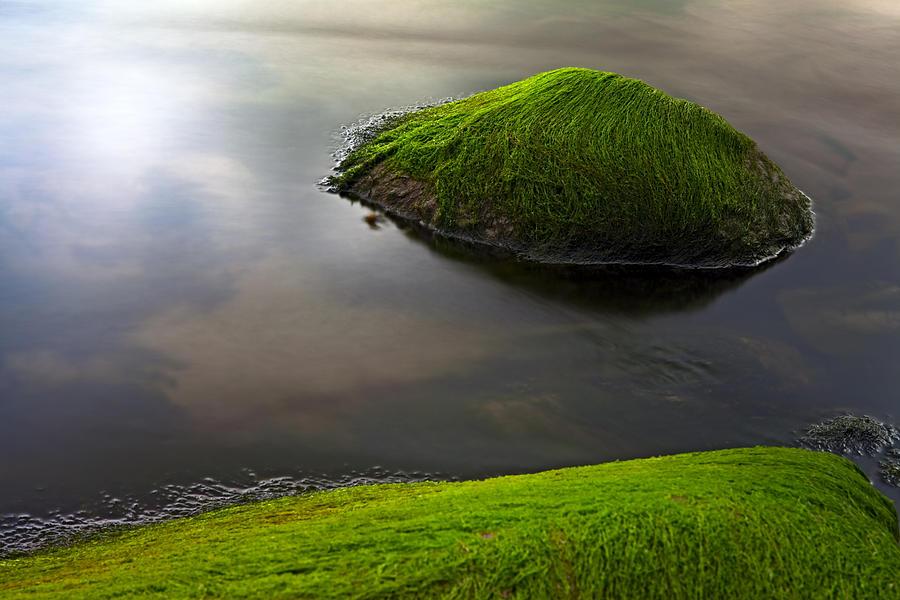 Seascape Seaweed On Rocks Photograph