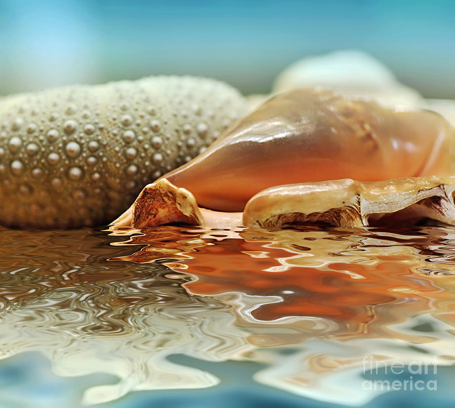 Seashell Reflections On Water Photograph