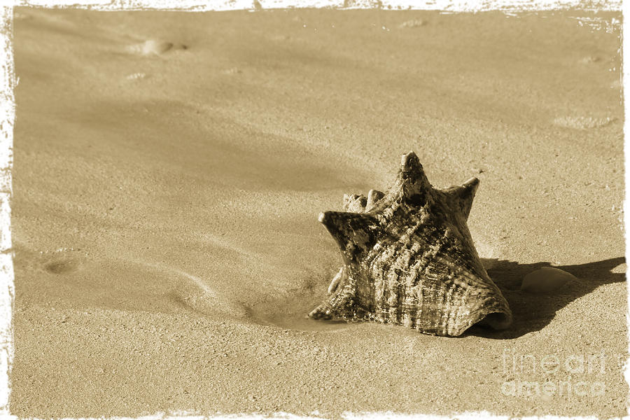 Seashell Photograph