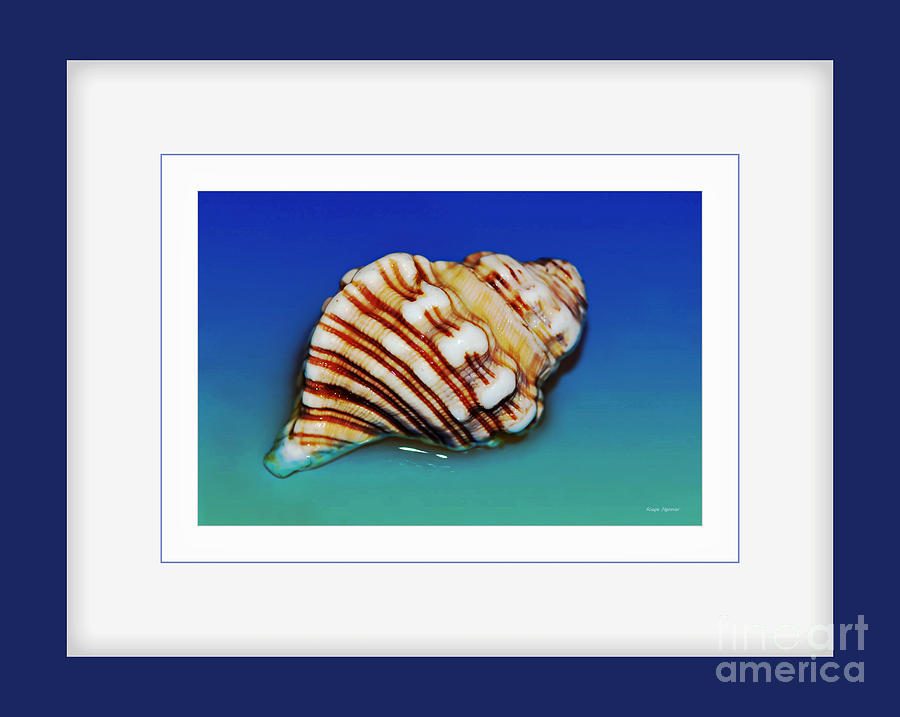 Seashell Wall Art 1 - Blue Frame Photograph  - Seashell Wall Art 1 - Blue Frame Fine Art Print