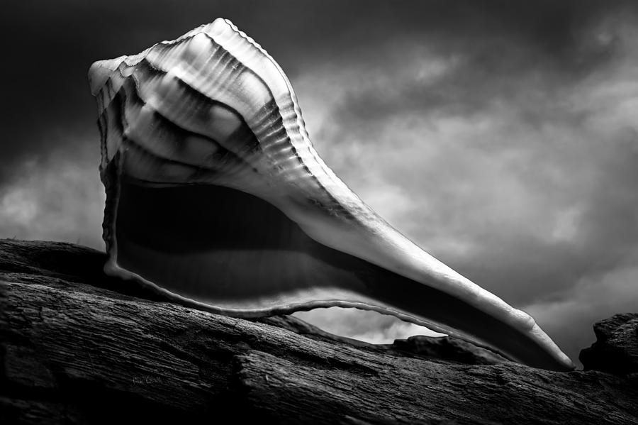 Shell Photograph - Seashell Without The Sea 3 by Bob Orsillo