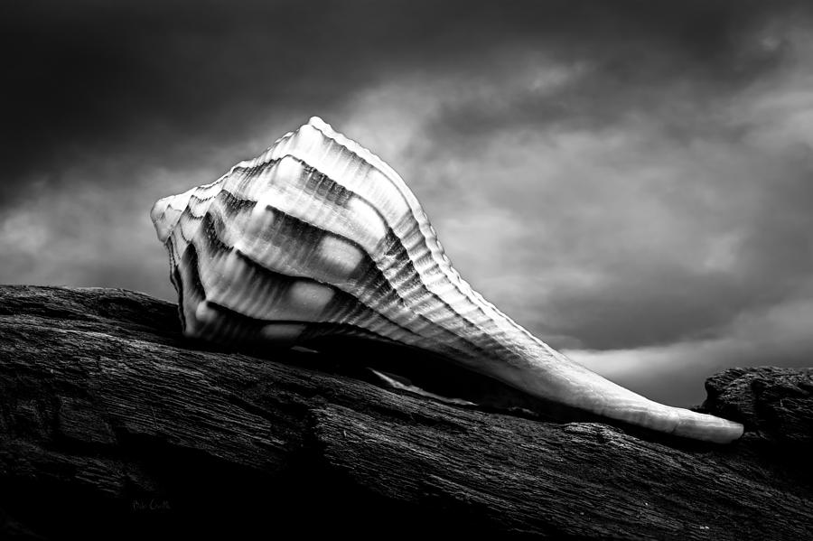 Seashell Without The Sea Photograph