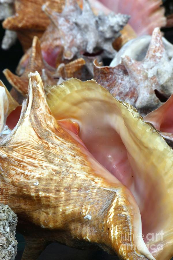 Seashells 2 Photograph