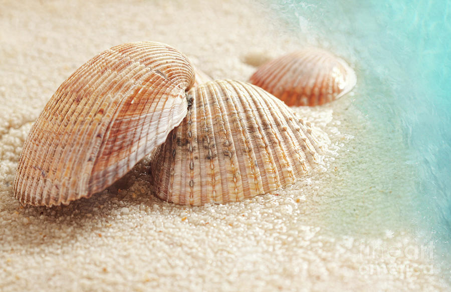 Backdrop Photograph - Seashells In The Wet Sand by Sandra Cunningham