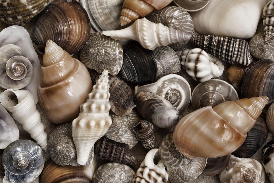 Shell Photograph - Seashells On The Beach by Carol Leigh