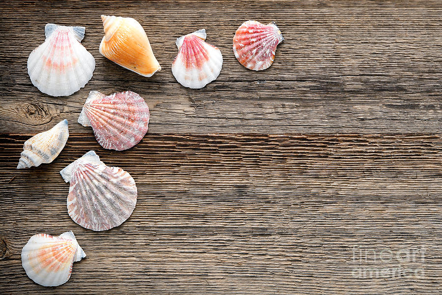 Seashells On Wood Photograph