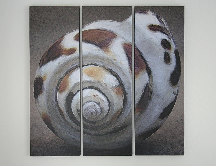 Seashells Spectacular No 2 - Triptych Photograph