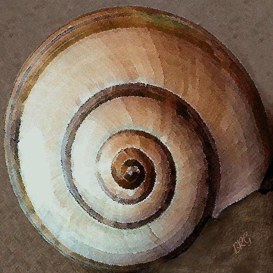 Seashell Photograph - Seashells Spectacular No 34 by Ben and Raisa Gertsberg