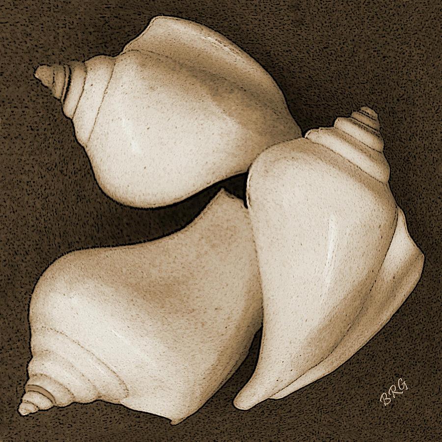 Seashell Photograph - Seashells Spectacular No 4 by Ben and Raisa Gertsberg