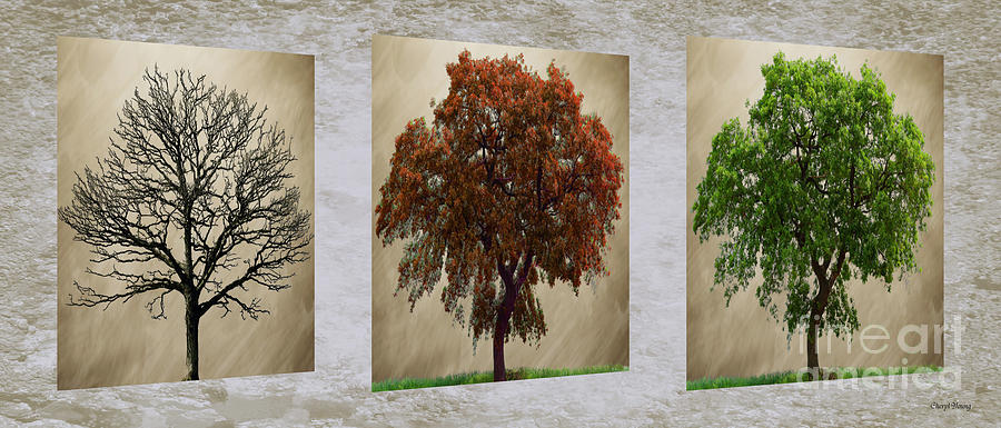 Seasons Triptych Photograph