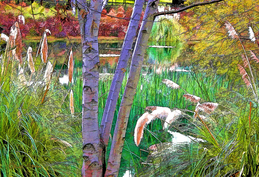 Secluded Pond Photograph