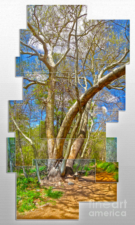 Sedona Arizona Big Tree Painting  - Sedona Arizona Big Tree Fine Art Print