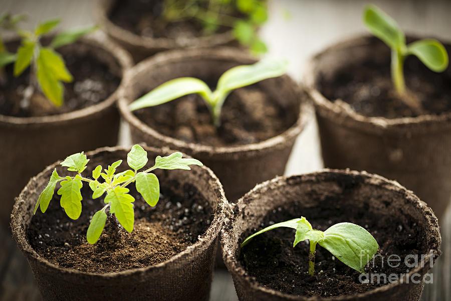 Seedlings Photograph - Seedlings  by Elena Elisseeva