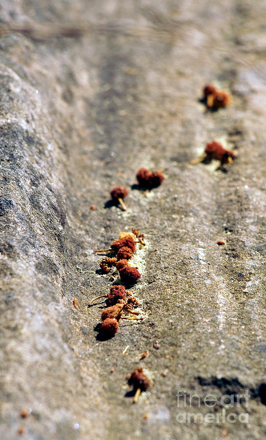 Seeds On Stone Photograph