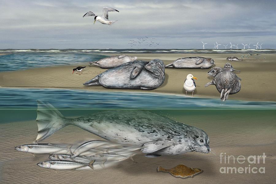 Seehunde - Seehundbank - Wattenmeer - Zeehond Bank - Waddenzee - Vadehavet - Sandbanke -aegte Sael   Painting