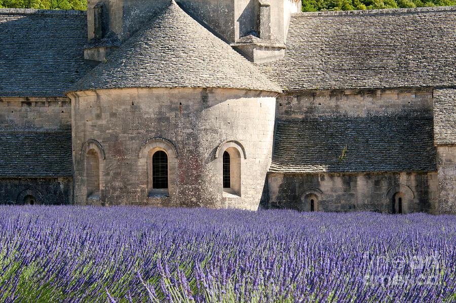 Senanque Lavender Photograph