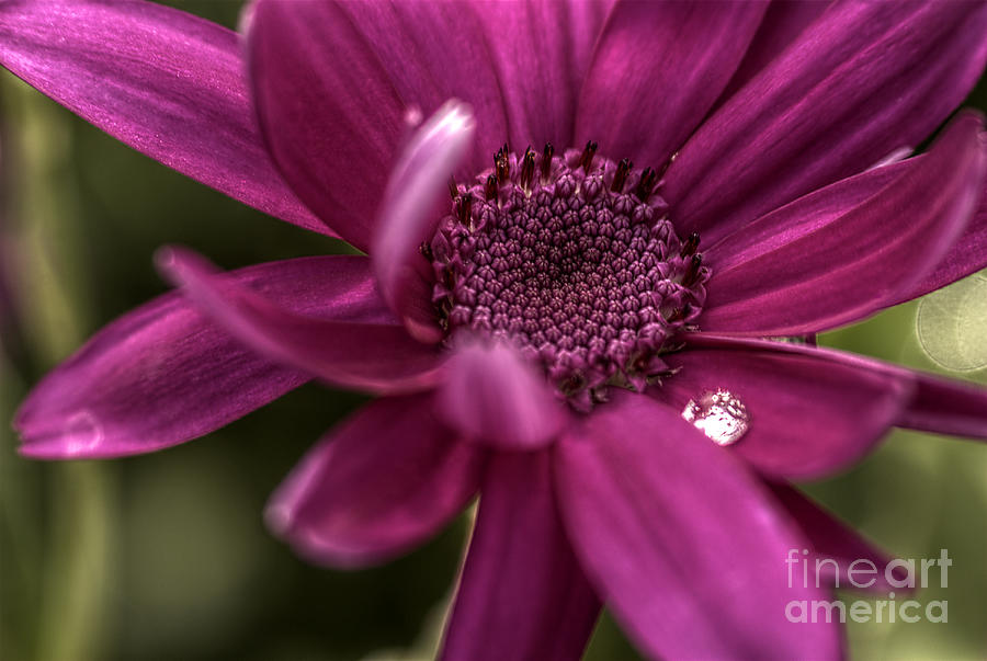Hdr Photograph - Senetti Water Droplet by Andrew Pounder