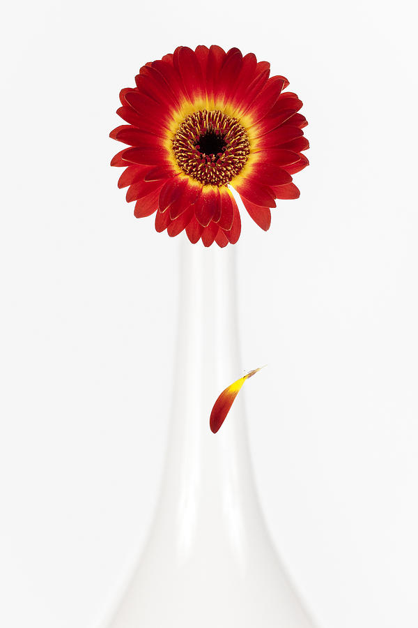 Flower Photograph - Separation by Dave Bowman