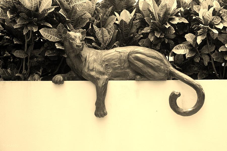 Sepia Cat Photograph