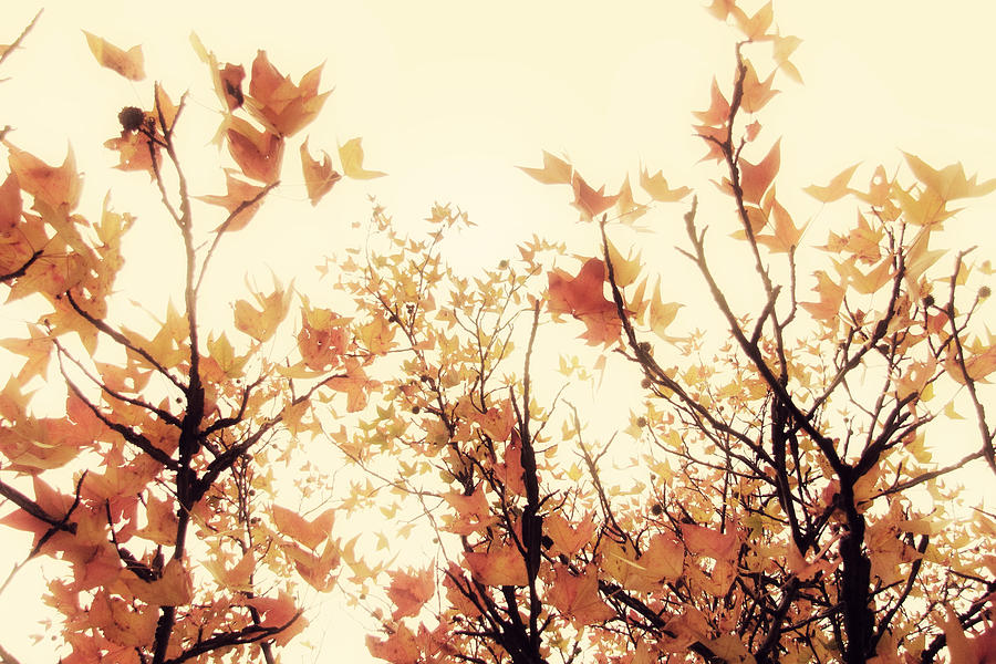 Fall Leaves Photograph - September Song by Amy Tyler