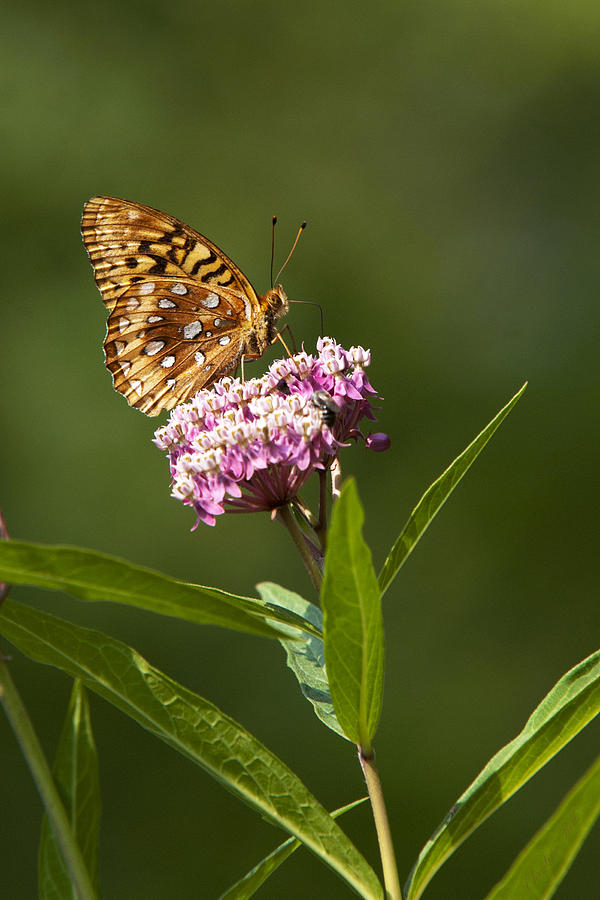 Serendipity Photograph - Serendipity Butterfly by Christina Rollo