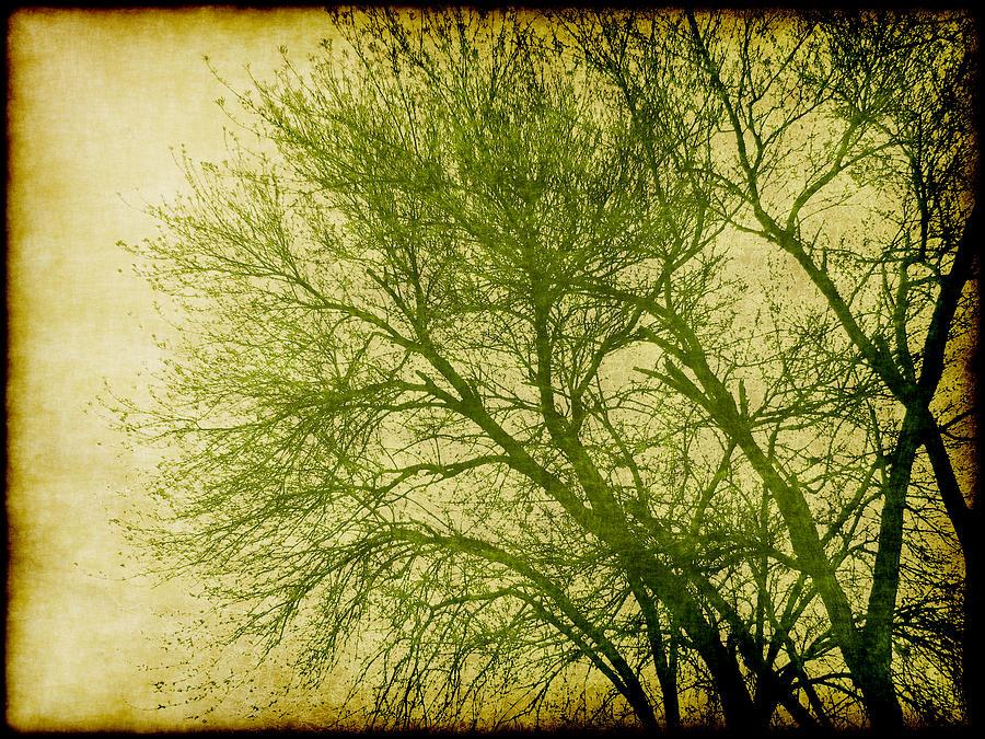 Serene Green 1 Digital Art