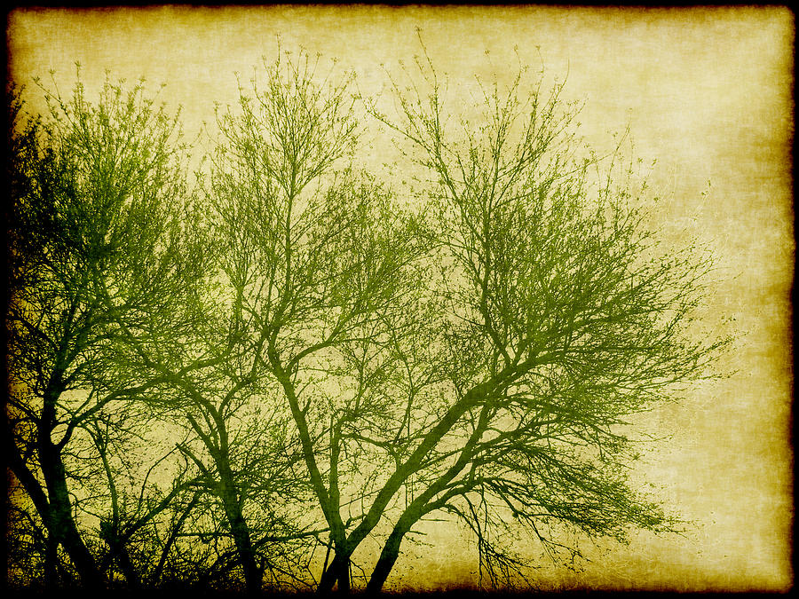 Serene Green 2 Digital Art  - Serene Green 2 Fine Art Print