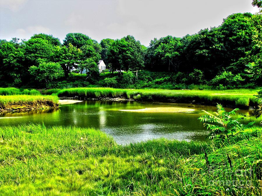 Serene Marsh Photograph