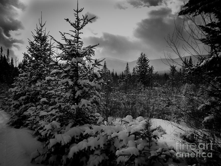 Serenity Photograph