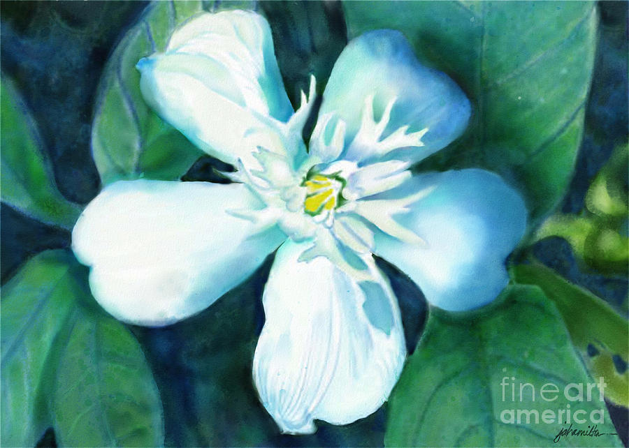 White Flower Painting - Serenity by Joan A Hamilton
