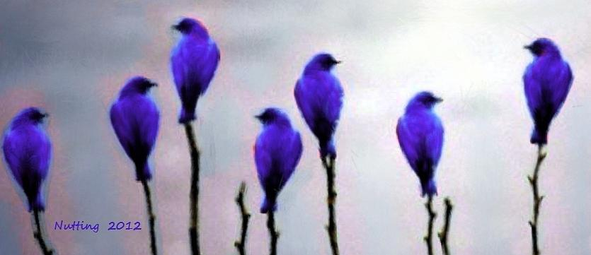Seven Birds Of Purple Painting
