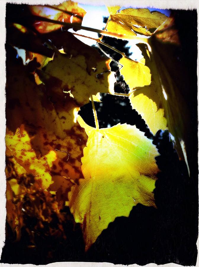 Shades Of October  Photograph  - Shades Of October  Fine Art Print