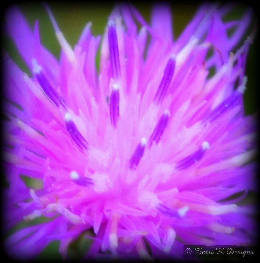 Shades Of Purple Photograph
