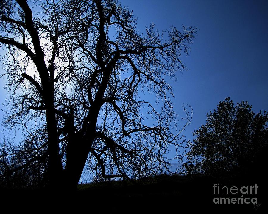 Shadowlands 1 Photograph