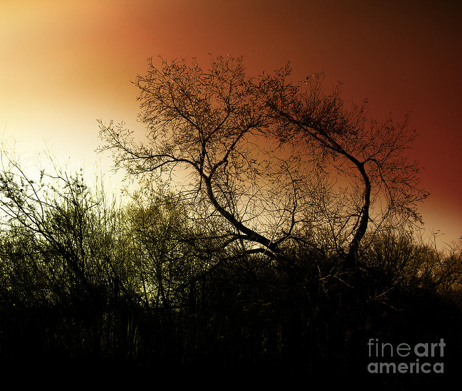 Shadowlands 9 Photograph  - Shadowlands 9 Fine Art Print
