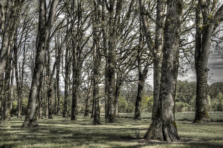 Shady Grove Photograph