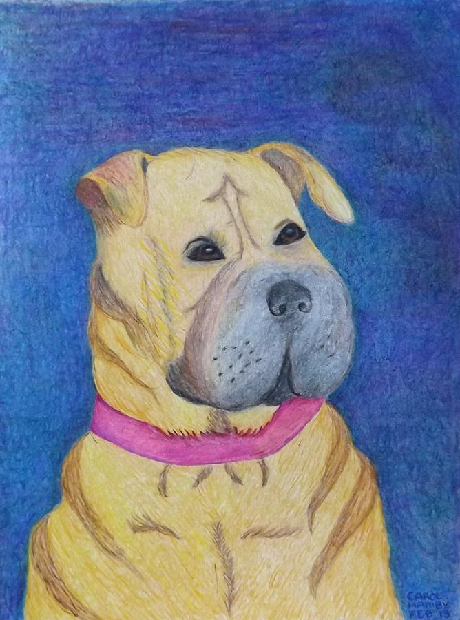Shar-pei Roxy Drawing