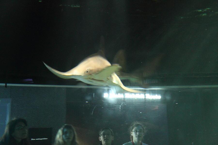Shark national aquarium in baltimore md 121214 Aquarium in baltimore