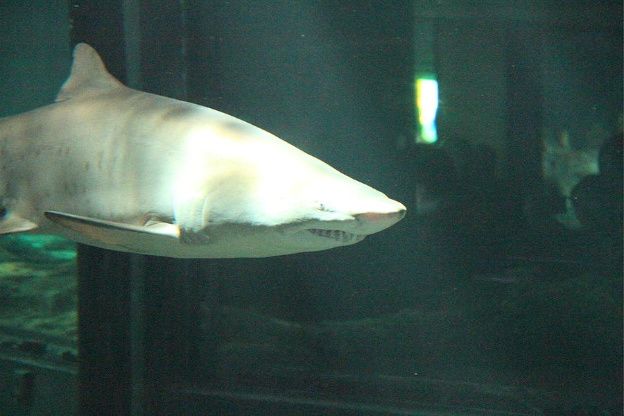 Shark National Aquarium In Baltimore Md 12124 Photograph By Dc Photographer