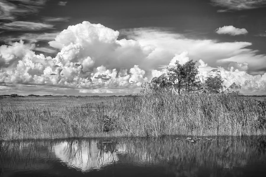 Tamiami Photograph - shark river slough BW by Rudy Umans